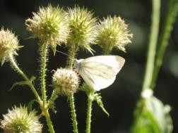 vlinders! overal!