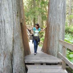 eeuwenoude bossen
