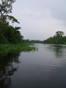 prachtige mangroven