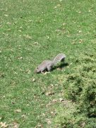 vaste bewoners van Central Park