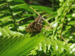 prachtige grote vlinders!